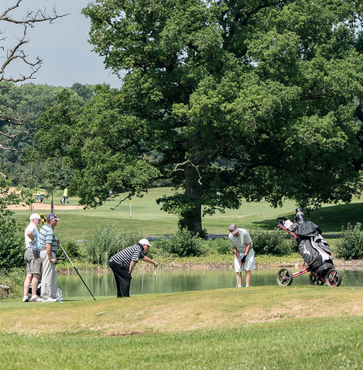 Some golfers on a green in front of a pond and a oak tree.